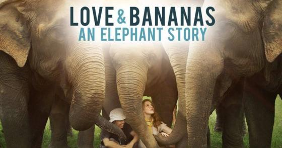 Love and Bananas theatrical poster