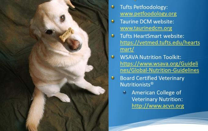 Dog with treat on nose, next to list of web links of pet care resources