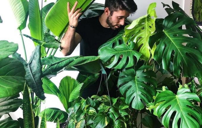 Nick Cutsumpas and some of his many plants.